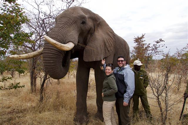 Meeting elephants in Zimbabwe!